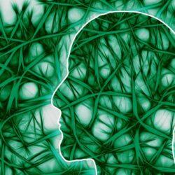 Sinir Hücreleri ve Snaptik Bağ