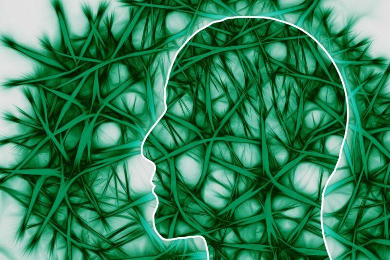 Sinir Sistemi ve Bağlantıları